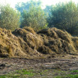 Dungheap manure — Stock Photo