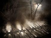 яма с дерева и свет — Стоковое фото