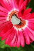 Flower of Love — Stock Photo