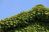 Het groene huis — Stockfoto