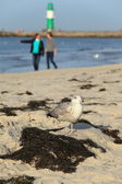 Beach Bird — Stock Photo