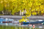 Jaro u řeky — Stock fotografie