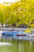 Spring at Town Pond — Stock Photo