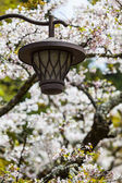 Sakura Lantern — Stock Photo