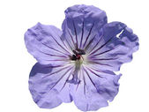 Island Urup flowers — Stock Photo