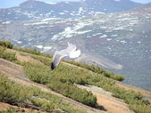 Flight of a seagull — Stock Photo