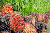 Pile of palm oil  — Stockfoto