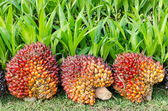 Pile of palm oil  — Stock Photo