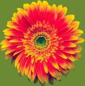 黄色い gerbera マクロ — ストック写真