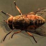 ������, ������: Blow fly macro