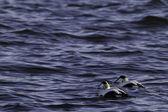 Amici al mare — Foto Stock