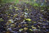 葉のカーペット — ストック写真