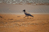 Avian beach stroll — Stock Photo