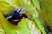 Black snail and autumn leaves macro — Stockfoto