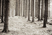 Infrared pine forest landscape — Stock Photo