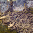 Tree roots by a creek — Stock Photo