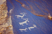 Animal cave painting — Stock Photo