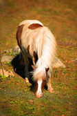 Grazing spotted foal — 图库照片