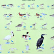 Plate with seabirds — Stock Photo