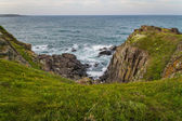 Green Grass blown by wind on edge of ocean shore cliffs — Stock Photo