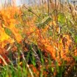 Summer Grass in Flames Forest Fire Danger Nature Background HD — Stock Video #29709891