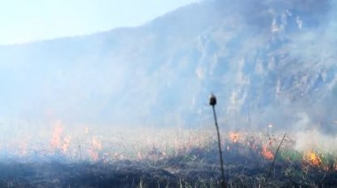 Forest Fire Devastation due to Climate Change Heat Haze Nature — Stock Video