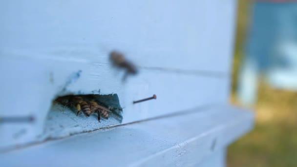Navetteurs busy bee — Vidéo