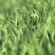 Spring Grass Blown by the Wind — Stock Video