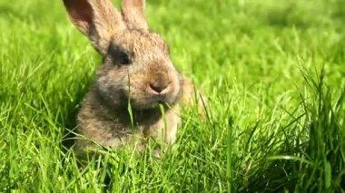 Rabbit on green grass — Stock Video