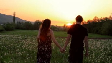 Cute Young Couple Walking Summer Dandelion Field at Sunset HD — Stock Video