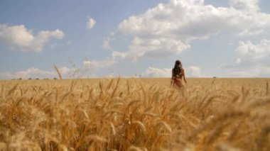 Young Woman Freedom Wheat Field Summer Worship Pose Religion — Stock Video