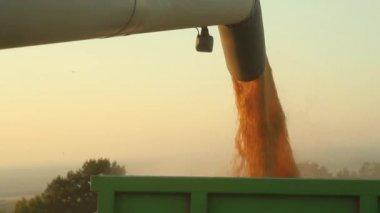 Field Harvester Combine — Stock Video