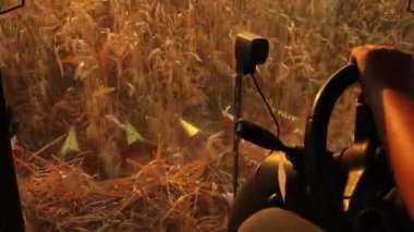 Harvester Cabin Collecting Corn — Stock Video