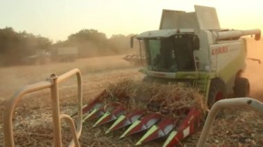 Field Harvester Combine Harvesting — Stock Video