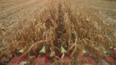 Harvester Blades Collecting Corn — Stock Video