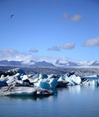 Gaviota sobrevolando los icebergs — Foto de Stock