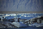 A scattering of icebergs — Stock Photo