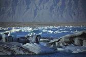 Eine streuung der eisberge — Stockfoto