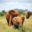 Family of elephants — Stock Photo