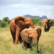 Stock Photo: Family of elephants