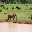 Wildlife at a waterhole — Stock Photo