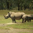 Stock Photo: Mother and baby Rhino