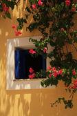 Buganvilla crece alrededor de la ventana — Foto de Stock