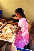 Girl shelling cashew nuts — Stock Photo