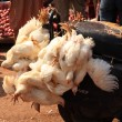 Chickens on the back of a motorbike India — Stock Photo