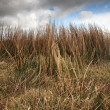 Stock Photo: Sunlit grass