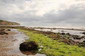 Seaweed on the beach Robin Hoods Bay — Stock Photo