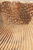 Close up of the Phoenix carving Hierapolis — Stock Photo