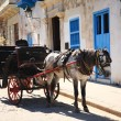 Horse and Carriage Cuba — Stock Photo