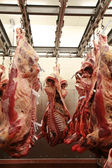 Cattle carcass maturing in a refrigerator — Stock Photo
